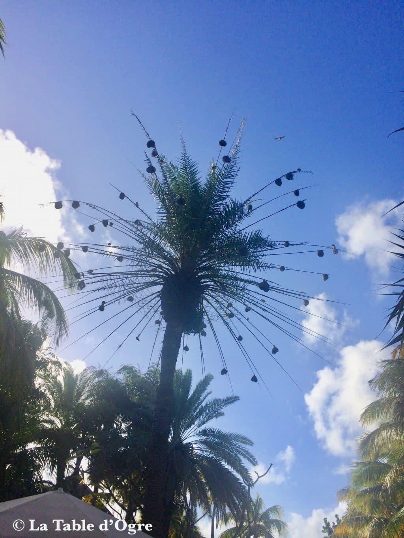 Republik Touessrok Arbre nid d'oiseaux