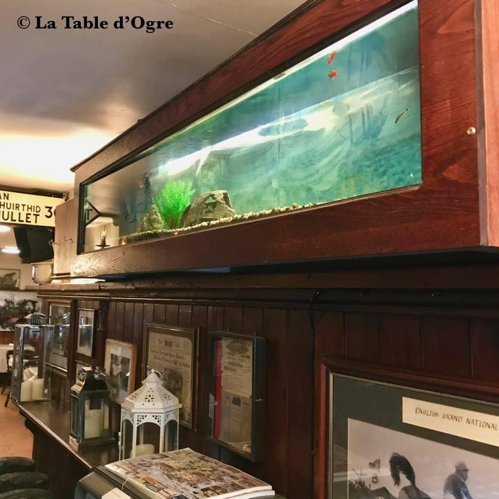 Hiney's Aquarium