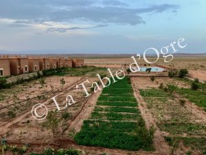 Ile de Ouarzazate Potager et piscine
